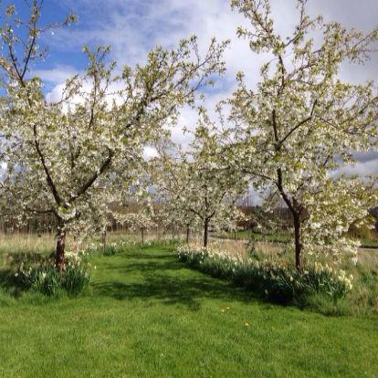 Wellwood Centre Garden